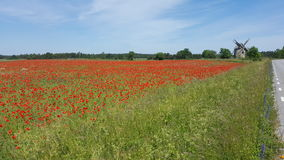 Rött vallmofält, övergiven väderkvarn Arkivfoton