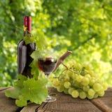 Rött vin i vingård Royaltyfria Foton