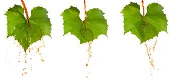 Rött vin och leafs Arkivbild