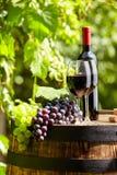 Rött vin på trädgårds- terrass Royaltyfri Bild