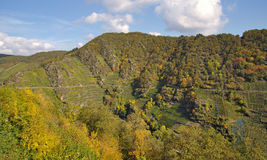 Rött vinTrail nära Mayschoss, Ahr dal royaltyfria bilder