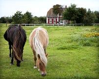 Rømø Pferde Lizenzfreies Stockfoto