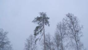 Rússia, em fevereiro de 2019: blizzard e grandes trações Um forte vento agita as árvores na floresta do inverno filme
