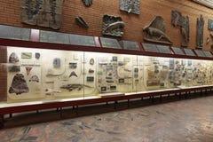 Museu Paleontological imagem de stock