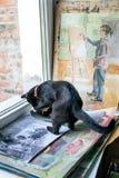 Rússia, Omsk - 2 de julho de 2015: gato no estúdio da pintura Fotografia de Stock Royalty Free