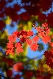 Rússia. Outono. 33 Fotografia de Stock Royalty Free