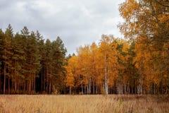 Rússia Paisagem Queda atrasada da madeira imagens de stock