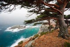 Rússia, Primorye, pinho centenário em uma praia rochosa imagens de stock