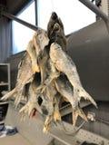 Rússia St Petersburg O peixe secado é o prato favorito em Rússia 3 fotografia de stock