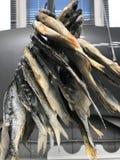Rússia St Petersburg O peixe secado é o prato favorito em Russia1 imagem de stock royalty free