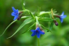 Rússia vegetação de floresta no verão as flores na floresta a flor são chamadas a flor de Vasilok/centáurea, flores nas frentes Foto de Stock