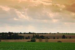 Rübefelder und -Getreidefelder im Fall Lizenzfreie Stockfotos