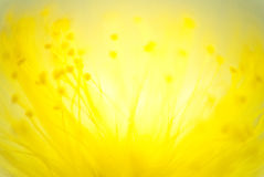 Rück-lense Makro von Fäden einer Blume Ein Experiment unter Verwendung 5 Lizenzfreie Stockfotos