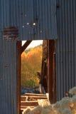 Rücklicht goldene Aspen-Bäume durch alten Türrahmen am abandone Lizenzfreie Stockbilder