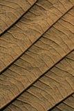 Rückseite eines Blattes der braunen Eiche Lizenzfreie Stockfotografie