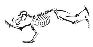 Rückseite und Weiß des Bärnskeletts herein Stockfotografie