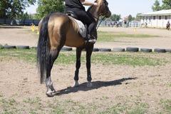 Rückseitenpferd, Jockey reitet einen Hengst, ein Gras und Räder herum lizenzfreie stockbilder