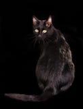 Rückseitige Ansicht der schwarzen Katze, Kamera betrachtend Stockbild
