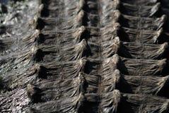 Rückseitige Rüstung des Krokodils stockfoto