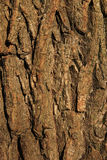 Rückseitiges Beschaffenheitsmuster des Baums Stockfoto