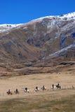 Rückseitiges Land-Sattel-Expeditionen stockfotos
