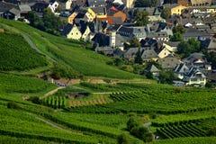 Rüdesheim am Rhein - West Germany. Vineyards in west Germany, September 2014 Stock Images