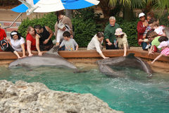 Rührende Delphine der Leute durch ihre Hände Stockfotos