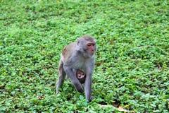 Rührender Rahmen, Affemutter und Baby Stockfotografie