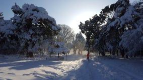 Rütteln auf der schneebedeckten Straße im Park Stockbilder