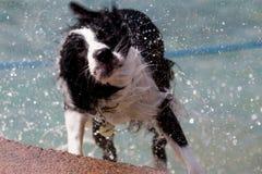 Rütteln des Hundes Lizenzfreies Stockfoto