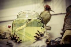 rütteln Sie mit einer Flüssigkeit und eine Schlange, die inner sind und eine Spinne, um Halloween zu verzieren Lizenzfreies Stockfoto