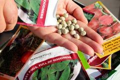 Rütteln von Samen in Hand. Stockbilder
