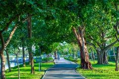 Rüttelnde Bahn der Straßenbahn im Allgemeinen Park unter großem Baum lizenzfreies stockbild