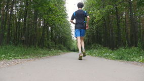 Rüttler auf einer Spur im Wald in der Zeitlupe stock video