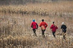 Rüttler, die durch ein Feld laufen Stockfoto
