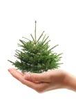 ręce futerkowy drzewo gospodarstwa obrazy royalty free