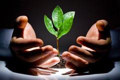 ręce roślinnych obraz royalty free