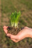 ręce roślinnych Fotografia Stock