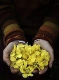 ręce trzymać kwiat Zdjęcia Royalty Free
