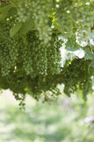 ręce winogron ilustracja etykietowania oryginału odpowiedniego malującego mojej winnicy wino Zdjęcia Stock