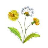 Ręcznie robiony śródpolny kwiatu dandelion Obrazy Stock