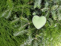 Ręcznie robiony odczuwany serce jako dekoracja zielona iglasta gałąź obrazy stock