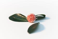 Ręcznie robiony różowy ceramiczny pierścionek Obraz Stock