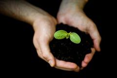 ręk chwyta męscy rośliny potomstwa Obrazy Royalty Free