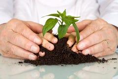 ręk dzieciaków nowy rośliny senior Obrazy Royalty Free