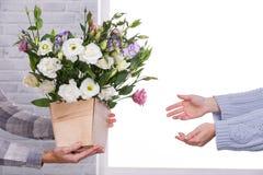 Ręk ręki nad garnkiem Japońskie róże inne ręki Fotografia Royalty Free