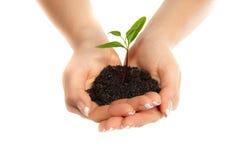 ręk rośliny kobieta Zdjęcie Stock