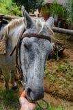 Ręka żywieniowy koń obraz stock