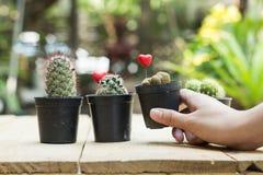 Ręka chwyta kaktusowy garnek na deski drewnie, zamazującym Obrazy Royalty Free