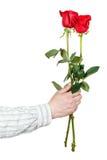 Ręka daje dwa czerwonej róży odizolowywającej Obraz Stock